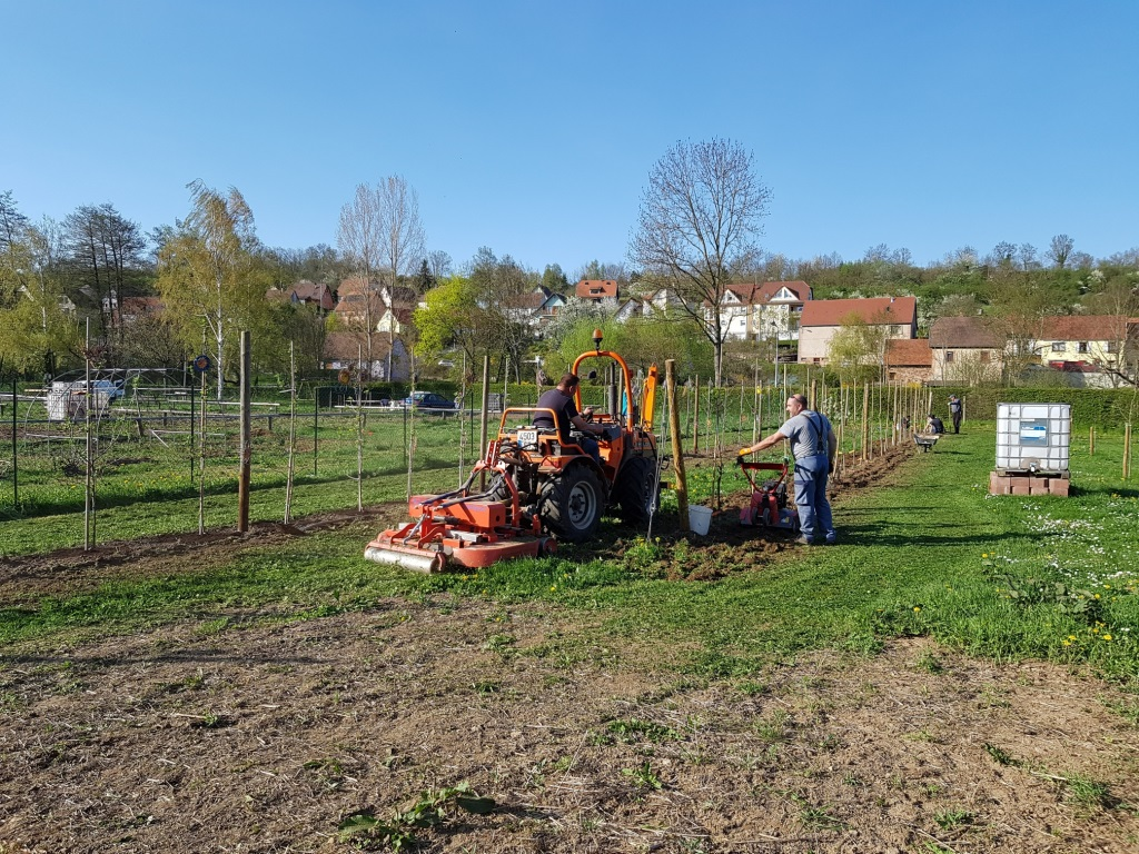 2018 04 18 Travaux Verger Ecole Romanswiller03