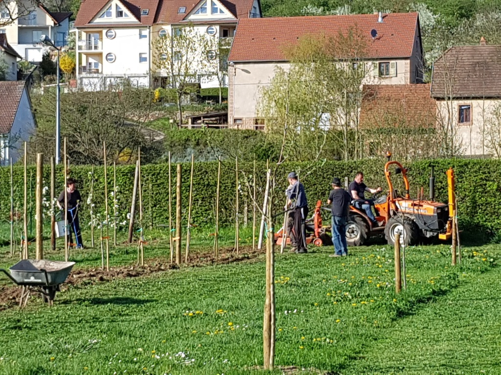 2018 04 18 Travaux Verger Ecole Romanswiller05