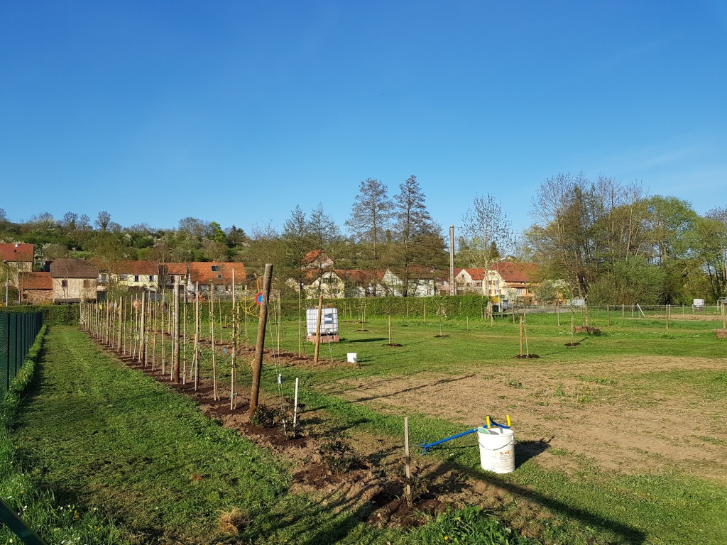 2018 04 18 Travaux Verger Ecole Romanswiller09