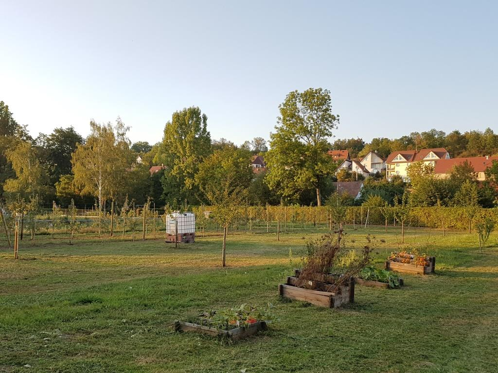 2018 09 19 Travaux Verger Ecole Romanswiller10